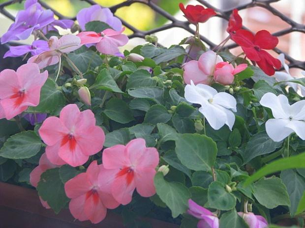 Blooms II