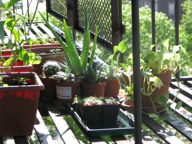 Herbology Inspiration -- May 2014